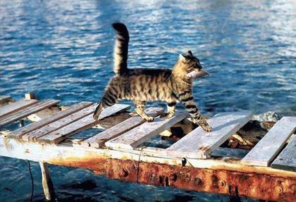 funny-cat-picture-cats-love-fish